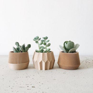 Set-small-succulent-plant-pot-gift